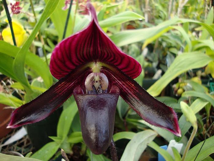 Орхидеи. Виды и сорта. (700x525, 105Kb)