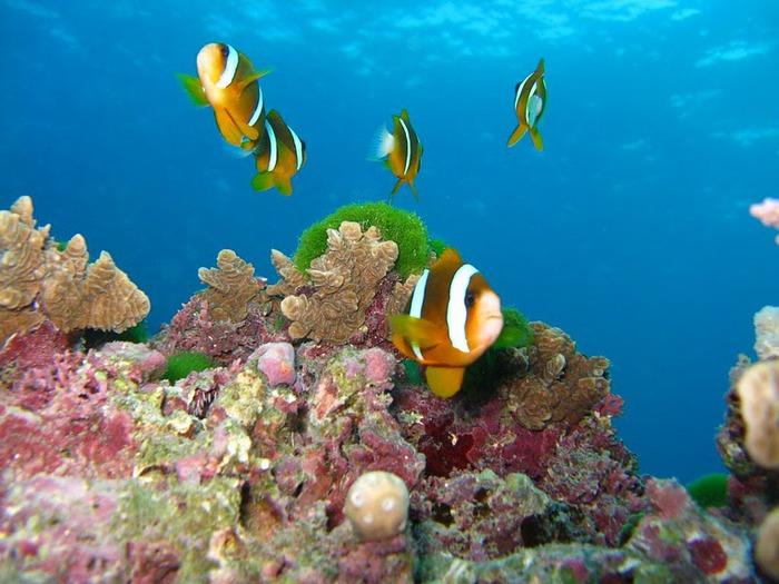 Восьмое чудо света - Большой Барьерный риф Австралии-Great Barrier Reef 65865