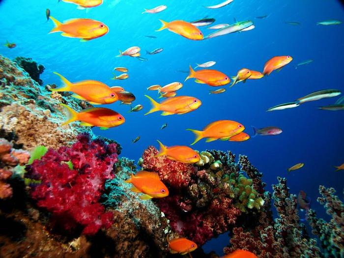 Восьмое чудо света - Большой Барьерный риф Австралии-Great Barrier Reef 97910
