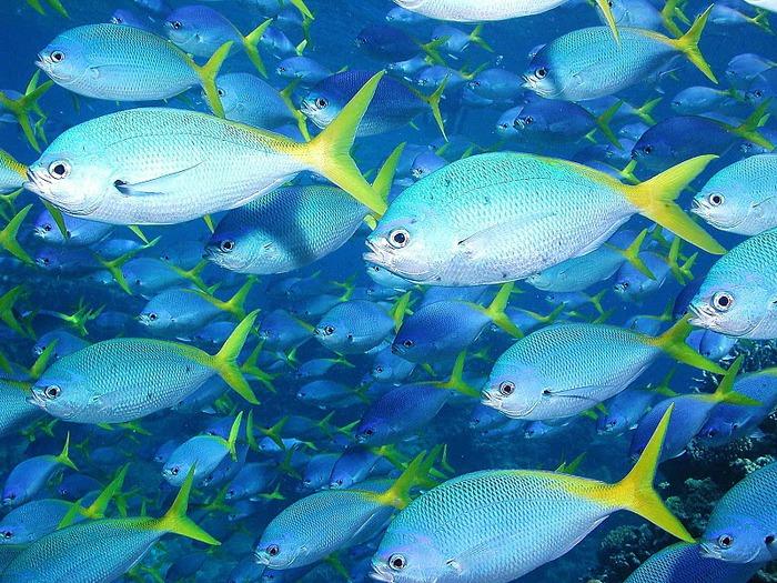 Восьмое чудо света - Большой Барьерный риф Австралии-Great Barrier Reef 91262