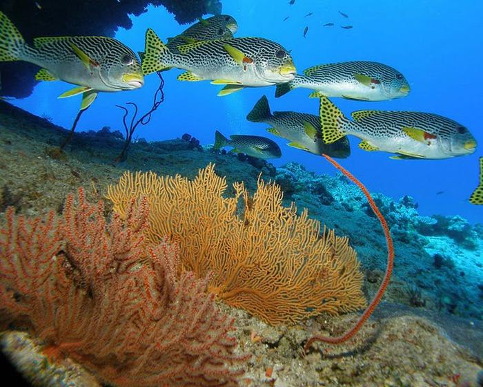 Восьмое чудо света - Большой Барьерный риф Австралии-Great Barrier Reef 64182