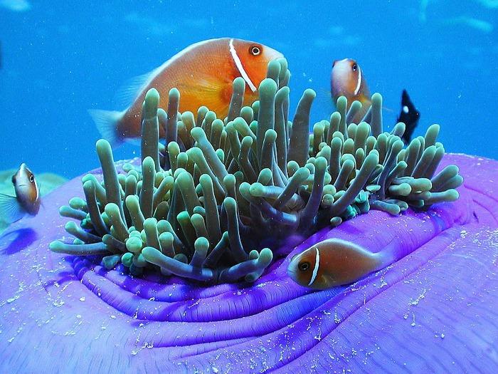 Восьмое чудо света - Большой Барьерный риф Австралии-Great Barrier Reef 15461
