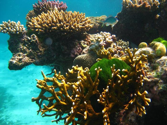 Восьмое чудо света - Большой Барьерный риф Австралии-Great Barrier Reef 78903