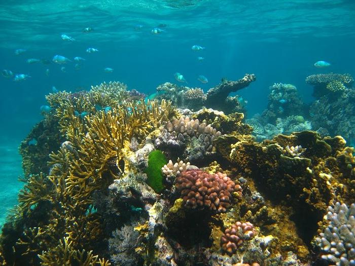 Восьмое чудо света - Большой Барьерный риф Австралии-Great Barrier Reef 74194
