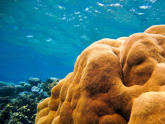 Восьмое чудо света - Большой Барьерный риф Австралии-Great Barrier Reef 37742