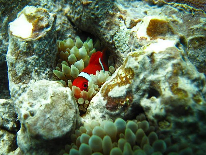 Восьмое чудо света - Большой Барьерный риф Австралии-Great Barrier Reef 64867
