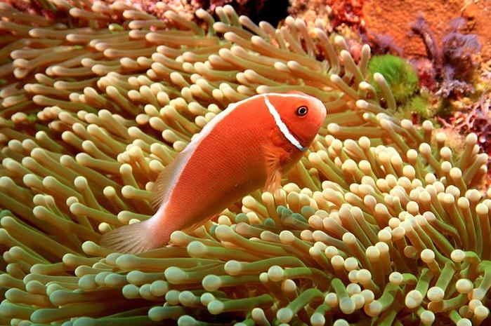 Восьмое чудо света - Большой Барьерный риф Австралии-Great Barrier Reef 22906