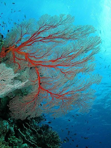 Восьмое чудо света - Большой Барьерный риф Австралии-Great Barrier Reef 80480