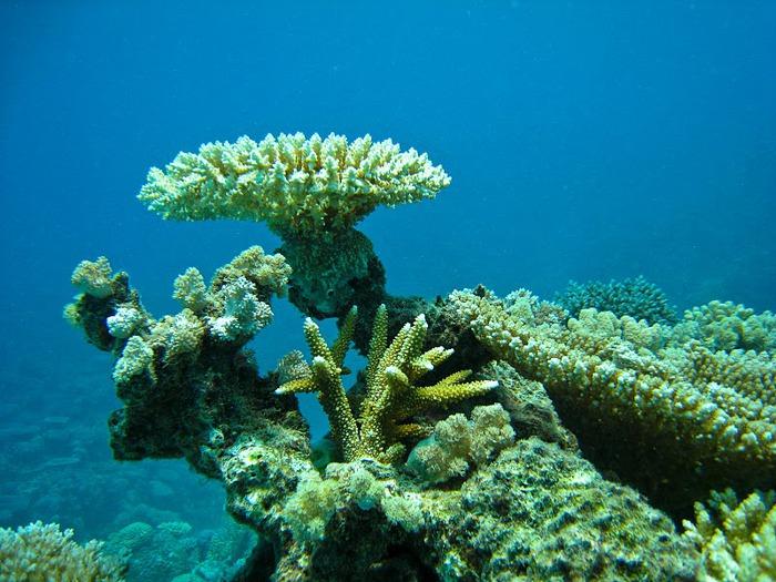 Восьмое чудо света - Большой Барьерный риф Австралии-Great Barrier Reef 25902
