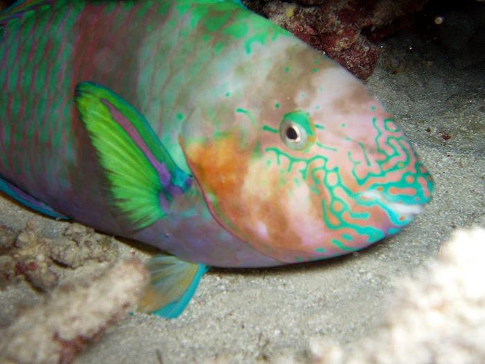 Восьмое чудо света - Большой Барьерный риф Австралии-Great Barrier Reef 16375