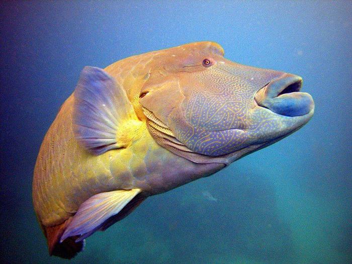 Восьмое чудо света - Большой Барьерный риф Австралии-Great Barrier Reef 99482