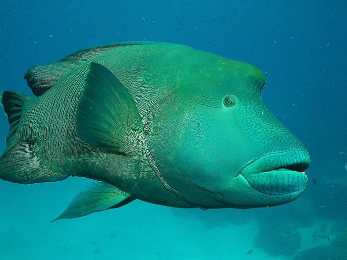 Восьмое чудо света - Большой Барьерный риф Австралии-Great Barrier Reef 32536
