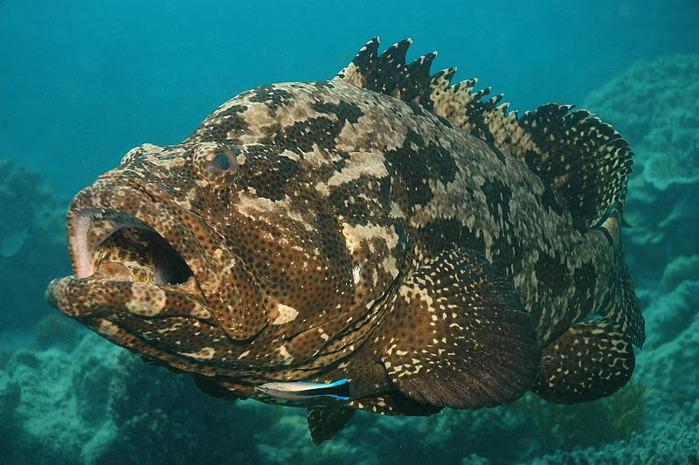 Восьмое чудо света - Большой Барьерный риф Австралии-Great Barrier Reef 21048