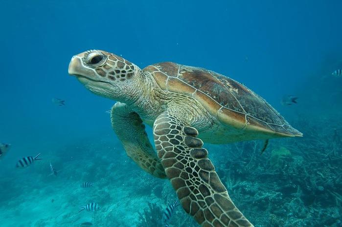 Восьмое чудо света - Большой Барьерный риф Австралии-Great Barrier Reef 62995