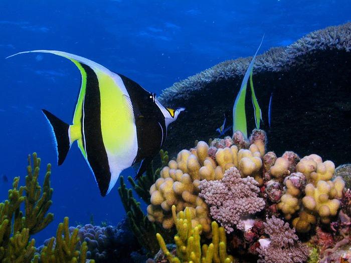 Восьмое чудо света - Большой Барьерный риф Австралии-Great Barrier Reef 15826