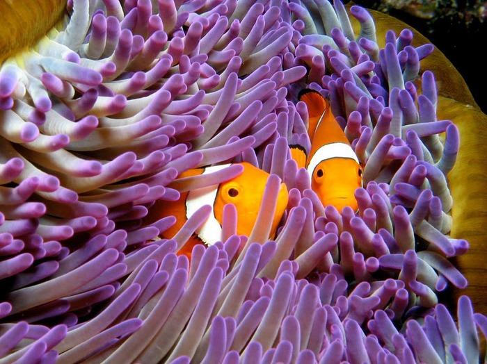 Восьмое чудо света - Большой Барьерный риф Австралии-Great Barrier Reef 35640
