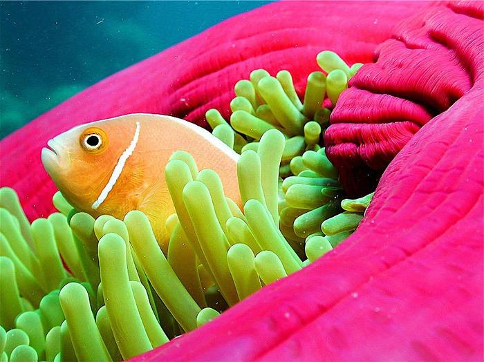 Восьмое чудо света - Большой Барьерный риф Австралии-Great Barrier Reef 30931