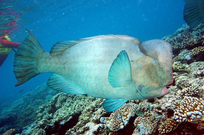 Восьмое чудо света - Большой Барьерный риф Австралии-Great Barrier Reef 90063