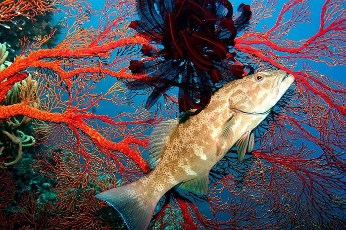 Восьмое чудо света - Большой Барьерный риф Австралии-Great Barrier Reef 11279