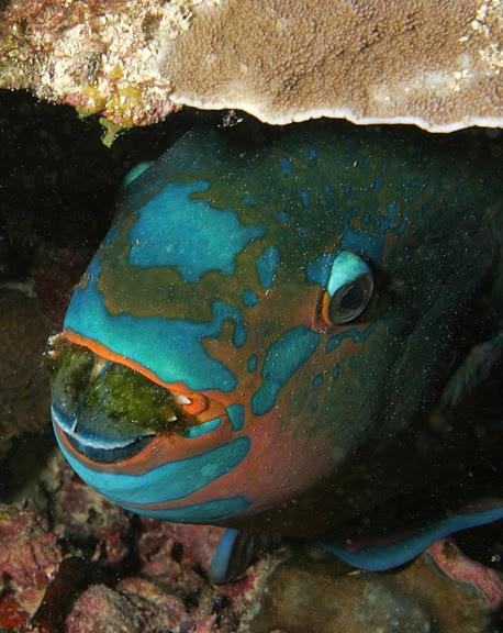 Восьмое чудо света - Большой Барьерный риф Австралии-Great Barrier Reef 32232