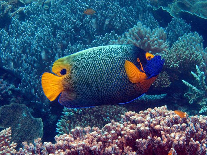 Восьмое чудо света - Большой Барьерный риф Австралии-Great Barrier Reef 96431
