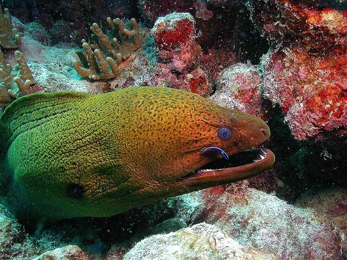 Восьмое чудо света - Большой Барьерный риф Австралии-Great Barrier Reef 98189