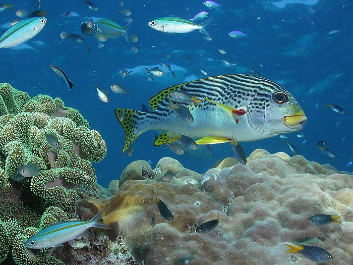Восьмое чудо света - Большой Барьерный риф Австралии-Great Barrier Reef 56890