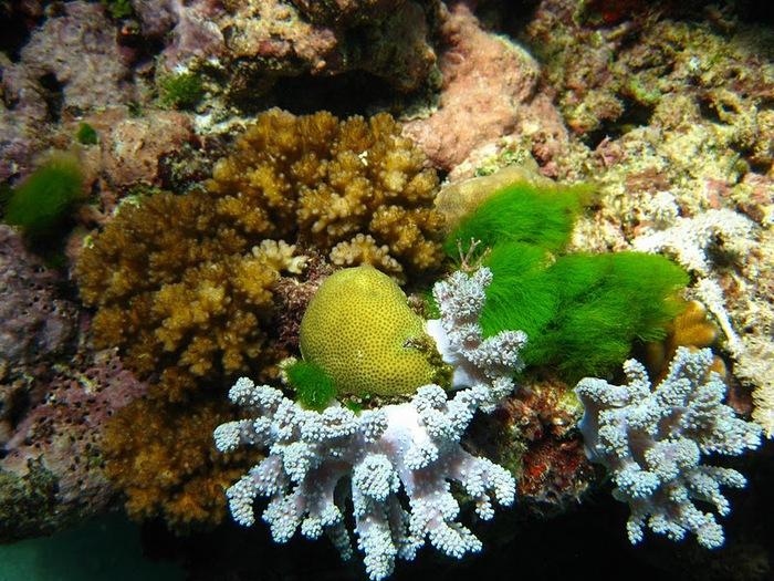 Восьмое чудо света - Большой Барьерный риф Австралии-Great Barrier Reef 99272