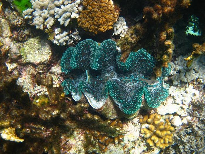 Восьмое чудо света - Большой Барьерный риф Австралии-Great Barrier Reef 74508