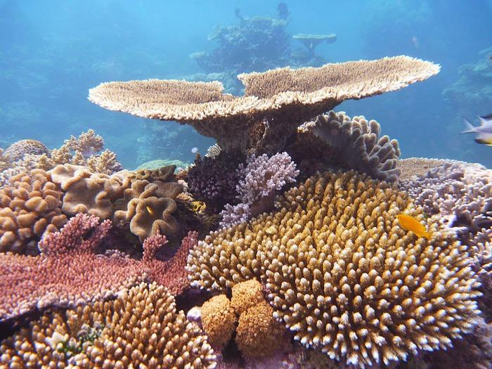 Восьмое чудо света - Большой Барьерный риф Австралии-Great Barrier Reef 52136