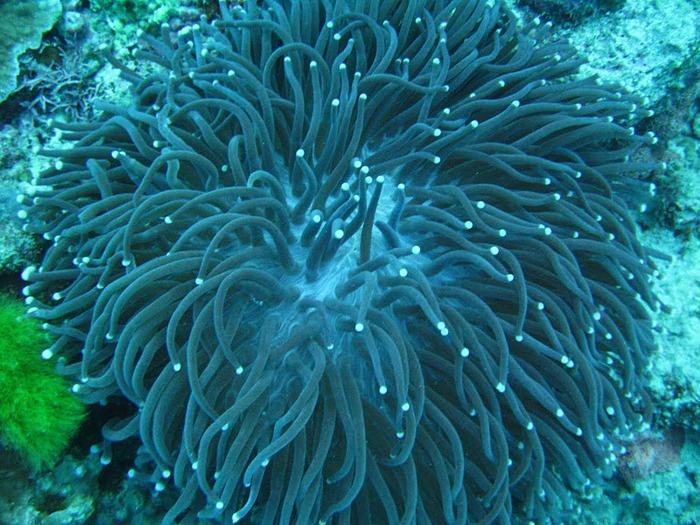 Восьмое чудо света - Большой Барьерный риф Австралии-Great Barrier Reef 67649