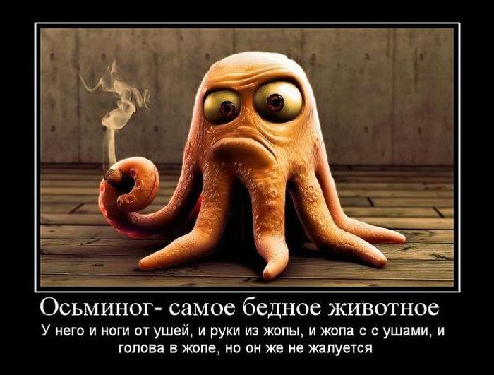 http://img0.liveinternet.ru/images/attach/c/2//67/633/67633909_1291876666_1291735220_demotivatory_11.jpg