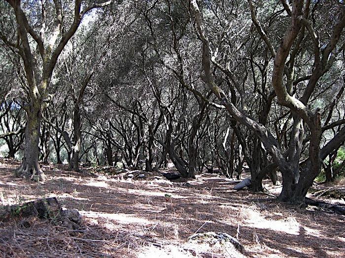 Корфу - «остров вечных возвращений». 31493