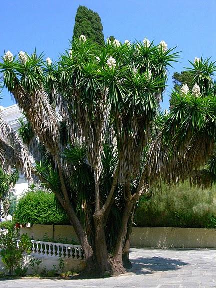 Корфу - «остров вечных возвращений». 73928