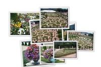 Цветы Версальского дворца