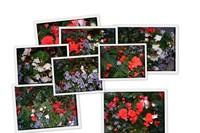 Цветы Мюнхена