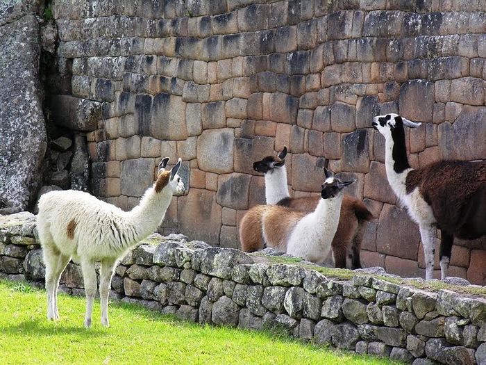 О Перу 41708