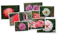 Цветы парка Багатель (часть 3)