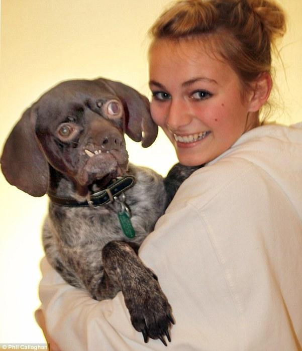 дуг - самая уродливая собака великобритании