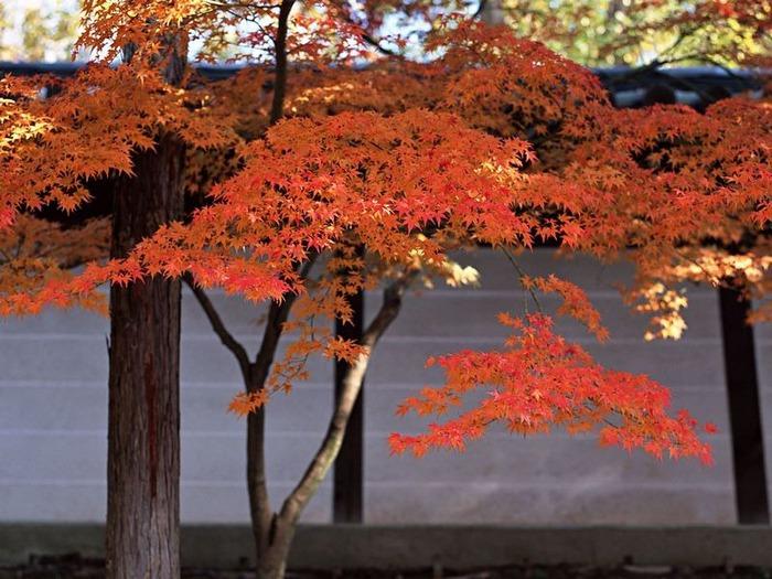 50 великолепных пейзажей Японии 24