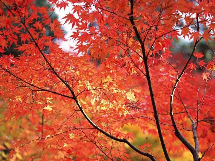 50 великолепных пейзажей Японии 26