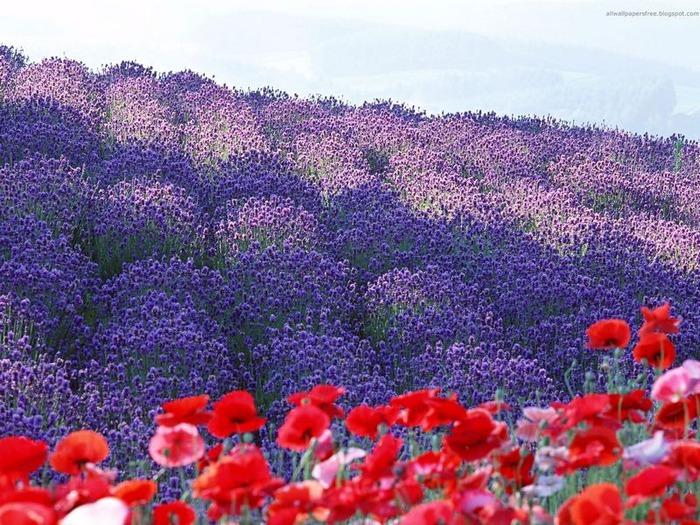 50 великолепных пейзажей Японии 47