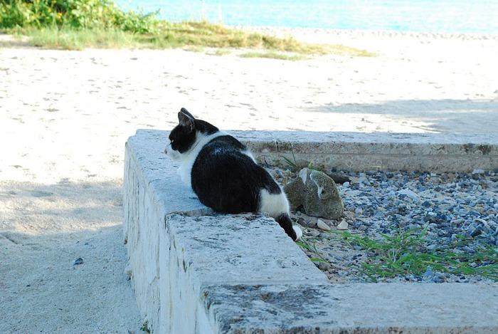 Taketomi Island - Остров Такетоми 32805