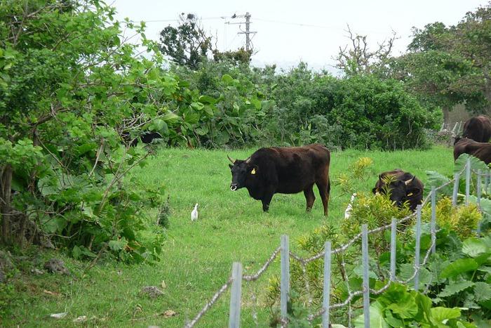 Taketomi Island - Остров Такетоми 69795
