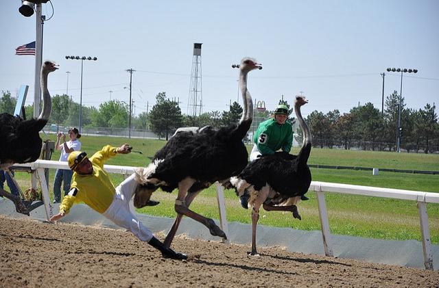 В Украине прошли гонки на страусах 28802