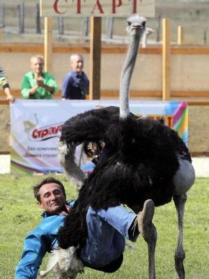 В Украине прошли гонки на страусах 88756