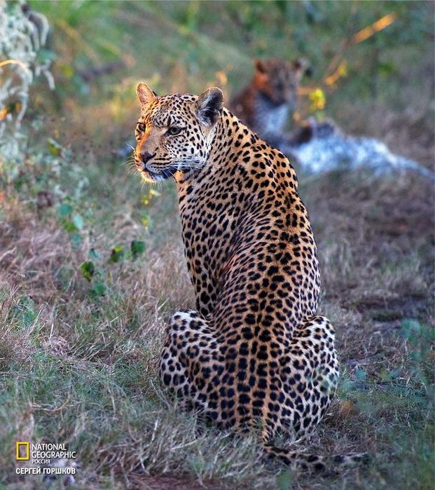 Фотовыставка «Живая природа Ботсваны» 6