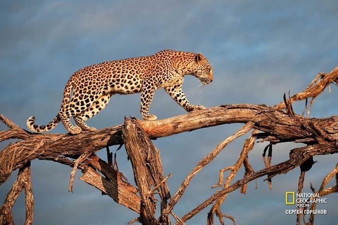 Фотовыставка «Живая природа Ботсваны» 8