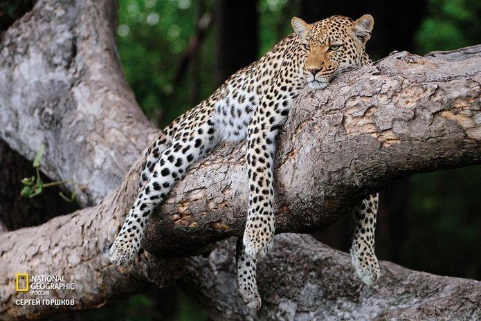 Фотовыставка «Живая природа Ботсваны» 10