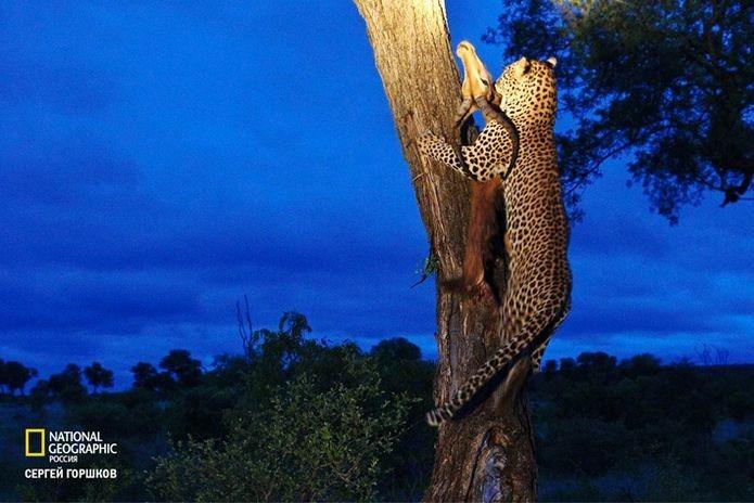 Фотовыставка «Живая природа Ботсваны» 11